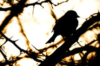 Little bird a Sparrow.