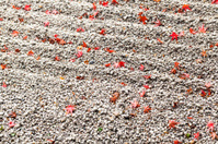 leave on gravel