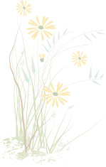Abstract prairie wildflowers