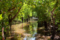 boat in water near mangrove trees