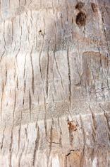 Palm crust macro