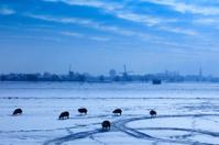Dutch windmills in a winter landscape