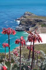 Cape Point Fynbos View