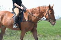 Horseback Riding Detailshot