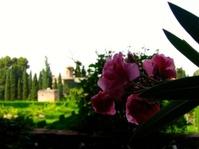 Flower at The Alhambra, Granada, Spain