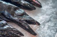 Black Scabbardfish , Funchal, Madeira.