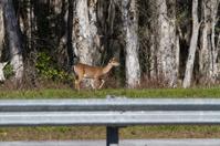 Deer along the road