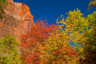 Zion National Park, Utah - November 2011
