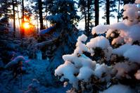 sunset in scandinavian forest