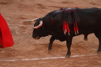 Bull Lunge