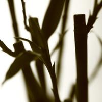 bamboo sepia1
