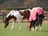 Rugged Horse