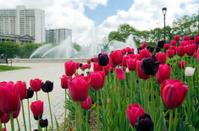 Fountain in Springtime
