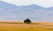 Southern Alberta Rural Scene Prairie