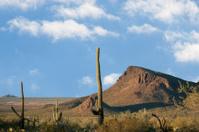 View of Arizona Desert Saguaros