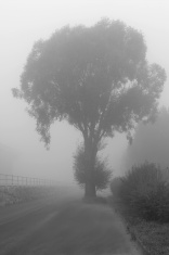 Big tree on a street with haze