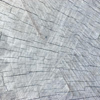 Natural Weathered Grey Tree Stump Cut Texture, Large Detailed Ba