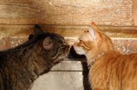 couple of cat