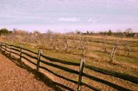 New Hampshire Apple Orchard