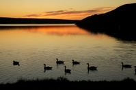 sunset and canada geese