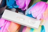 Unusual multicolored tulips and pregnancy test