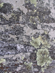 Abstract - Lichen on gray rock