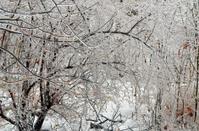Ice Lanscape