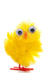 Funny easter chicken with big eyes