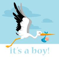stork delivering a baby boy