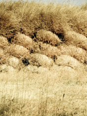 Dry grass stocked for feeding domestic animals in rural areas