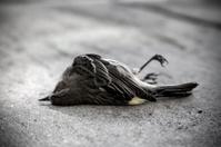 lifeless or dead bird