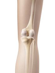female skeleton - knee