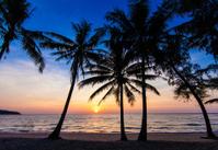 Nice sunset.  Tropical sunset, palm trees