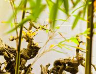 Plum Blossom and Bamboo,  梅花竹影