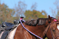 Horse and saddle waiting to ride