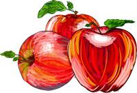 Beautiful Red Apple