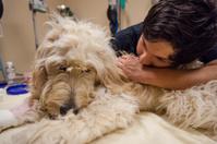 Veterinary Technician Comforts Dog in Animla Hospital