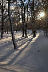 Frosty Shadows