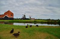 windmills and ducks
