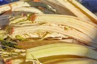 Carduus vegetable