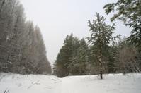 Winter foggy landscape