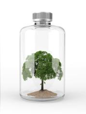 Tree inside a glass bottle.