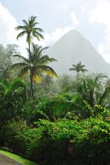 Piton At St. Lucia In Heavy Rain