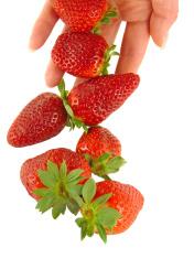 Strawberry falls on women's hands