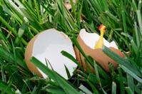 Spring Rubber Chicken Hatching in Grass