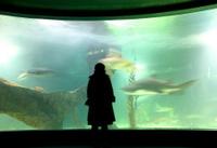 Woman and shark