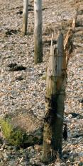 Broken beach post