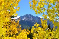 Colorado mountain view thorugh yellow aspen leaves like a window