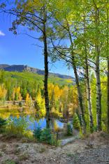 colourful aspens of Colorado and a lake during foliage season