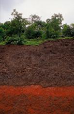 Ecology soil erosion